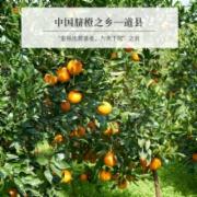 道县脐橙质量检测