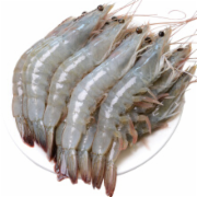 虾的检测服务  中国绿色发展中心定点委托机构  CMA认证 网上办理价格透明优惠