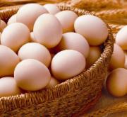 鲜鸡蛋检测 适用于各大电商平台 CMA质检报告