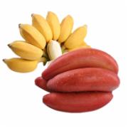 福建红香蕉苹果蕉组合 新鲜现摘香蕉水果 苏宁自营水果  水果检测  生鲜水果农药残留检测   GB 2763-2016食品安全国家标准 食品中农药最大残留限量