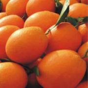 橙子检测  江西赣南脐橙橙子 生鲜应季水果橙子 新鲜水果检测 水果农药残留检测 水果中的重金属及其他有害物质检测