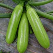 新鲜角瓜检测  有机西葫芦 茭瓜 角瓜  生鲜蔬菜检测   蔬菜农药残留检测 蔬菜中污染物限量检测