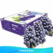 新鲜葡萄检测 云南新鲜夏黑葡萄无籽葡萄 新鲜水果葡萄提子  新鲜水果检测 水果农药残留检测 水果中的重金属及其他有害物质检测