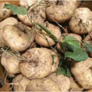 新鲜凉薯地瓜检测  湖北农家凉瓜葛瓜沙葛白地瓜蔬菜   生鲜蔬菜 生鲜蔬菜检测   蔬菜农药残留检测 蔬菜中污染物限量检测