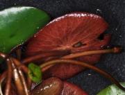 农家新鲜莼菜检测  生鲜蔬菜检测   蔬菜农药残留检测 蔬菜中污染物限量检测